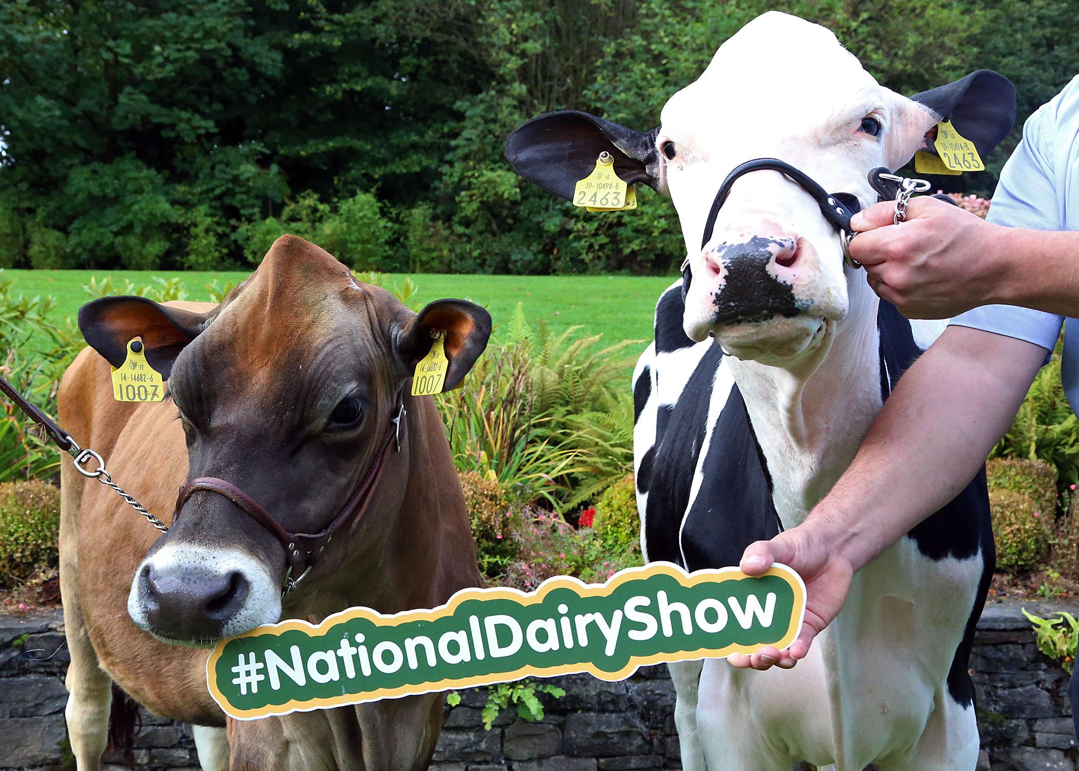 National Dairy Show 2017.JPG