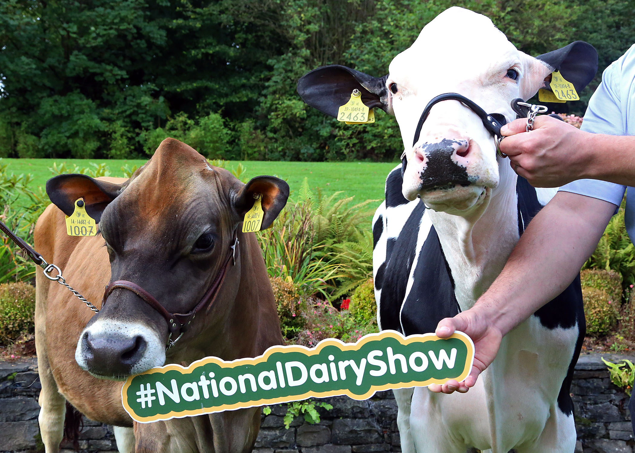National Dairy Show 2017.JPG